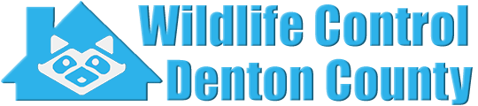 Denton County Wildlife and Animal Removal
